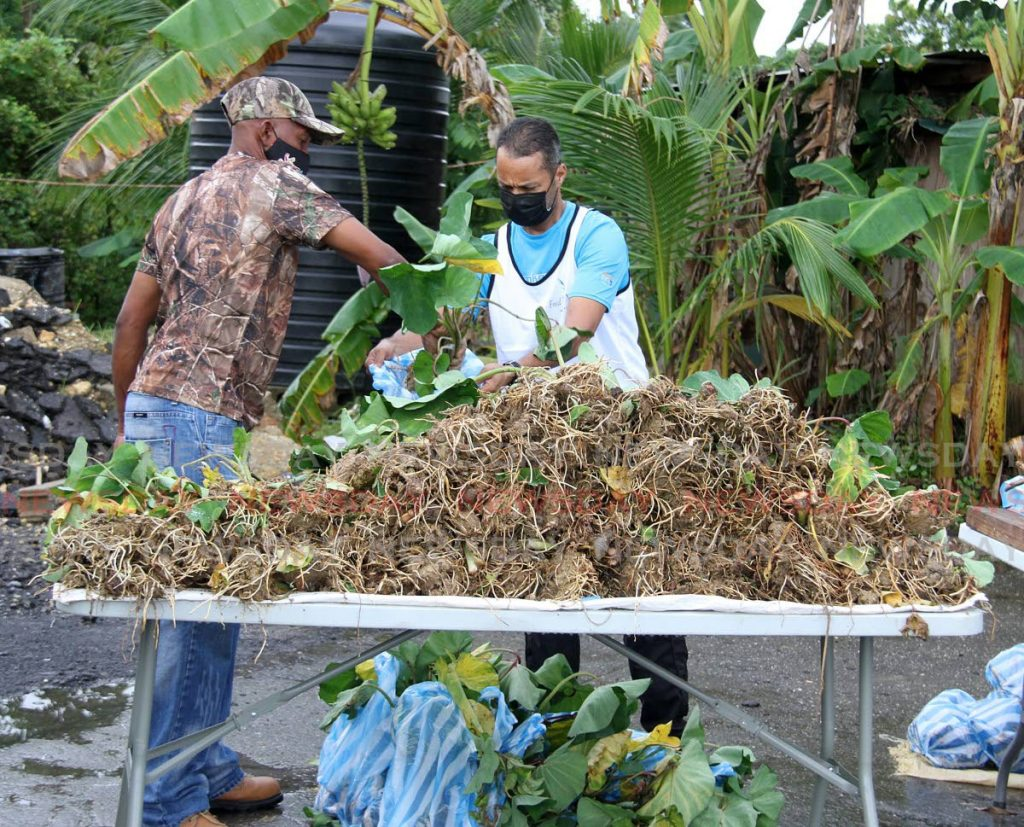 Members of Feed The Nation, bag dasheen plants to distribute to motorists at Mohess Trace, Debe on Sunday.  - Angelo Marcelle