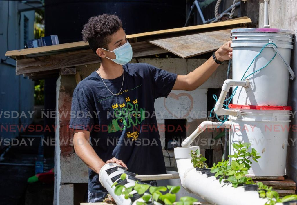 Nikolai Hart Hopley with his aquaponics system at his Lambeau, Tobago home.  - File Photo/David Reid