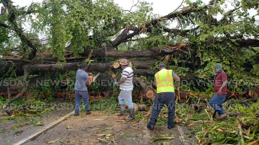 A disaster management crew from the Ministry of Works and Transport works to clear the Antigua Road in Valencia on Friday morning after two large almond trees blocked the roadway after being knocked down by high winds and heavy rain on Thursday night. - PHOTO BY ROGER JACOB