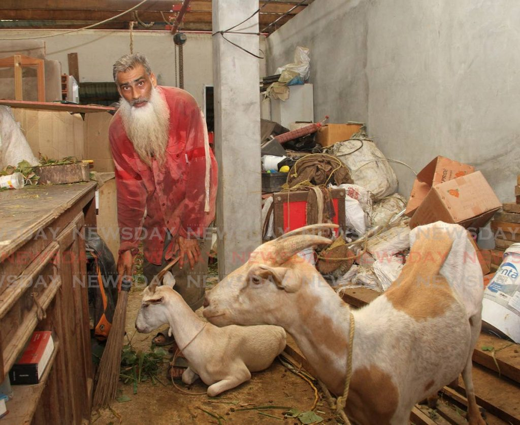 Ashmeed Mohammed now lives a simple life reaing goats and planting small crops in Rio Claro. - PHOTO BY ANGELO MARCELLE