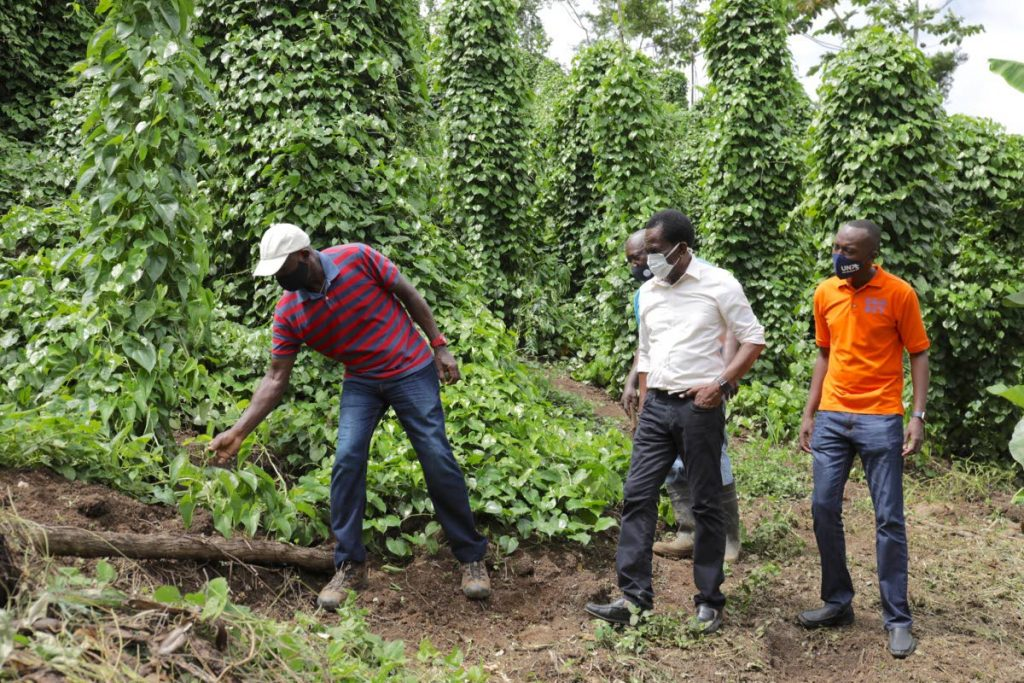 In this file photo, Prime Minister Dr  Keith Rowley and THA Chief Secretary Ancil Dennis at a farm in Goldsborough, Tobago. Finance Minister Colm Imbert in his 2021/2022 budget presentation said $30 million will be allocated for farmland development in Tobago. - Photo courtesy OPM