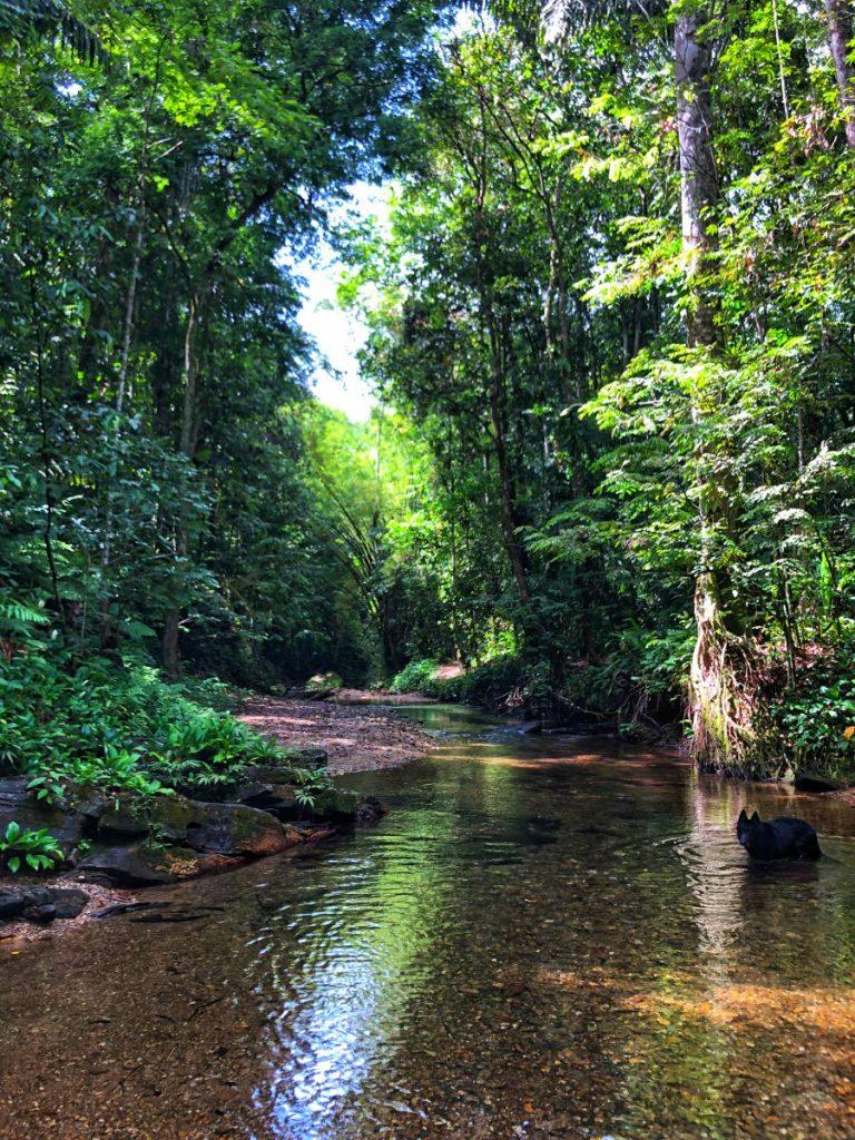 Tropical rivers of Trinidad. Photo courtesy Anjani Ganase -